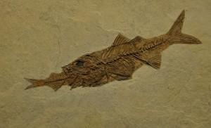 Вкаменелост от музея на створението 4