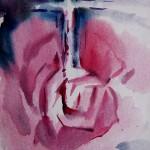 Нокаут Роза 2